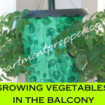 Growing Vegetables in the Balcony