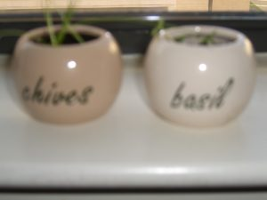 sprouting herbs