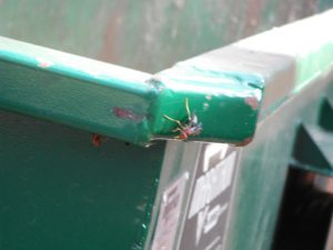 Wasp on Trash Bin
