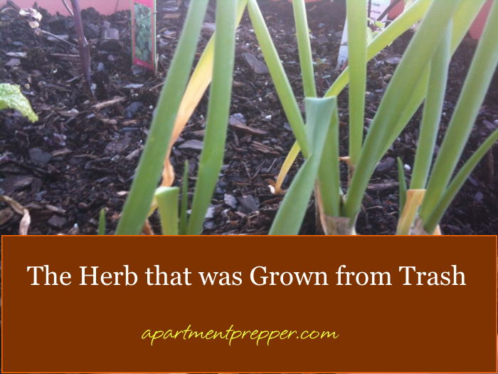 The Herb that was grown from trash1