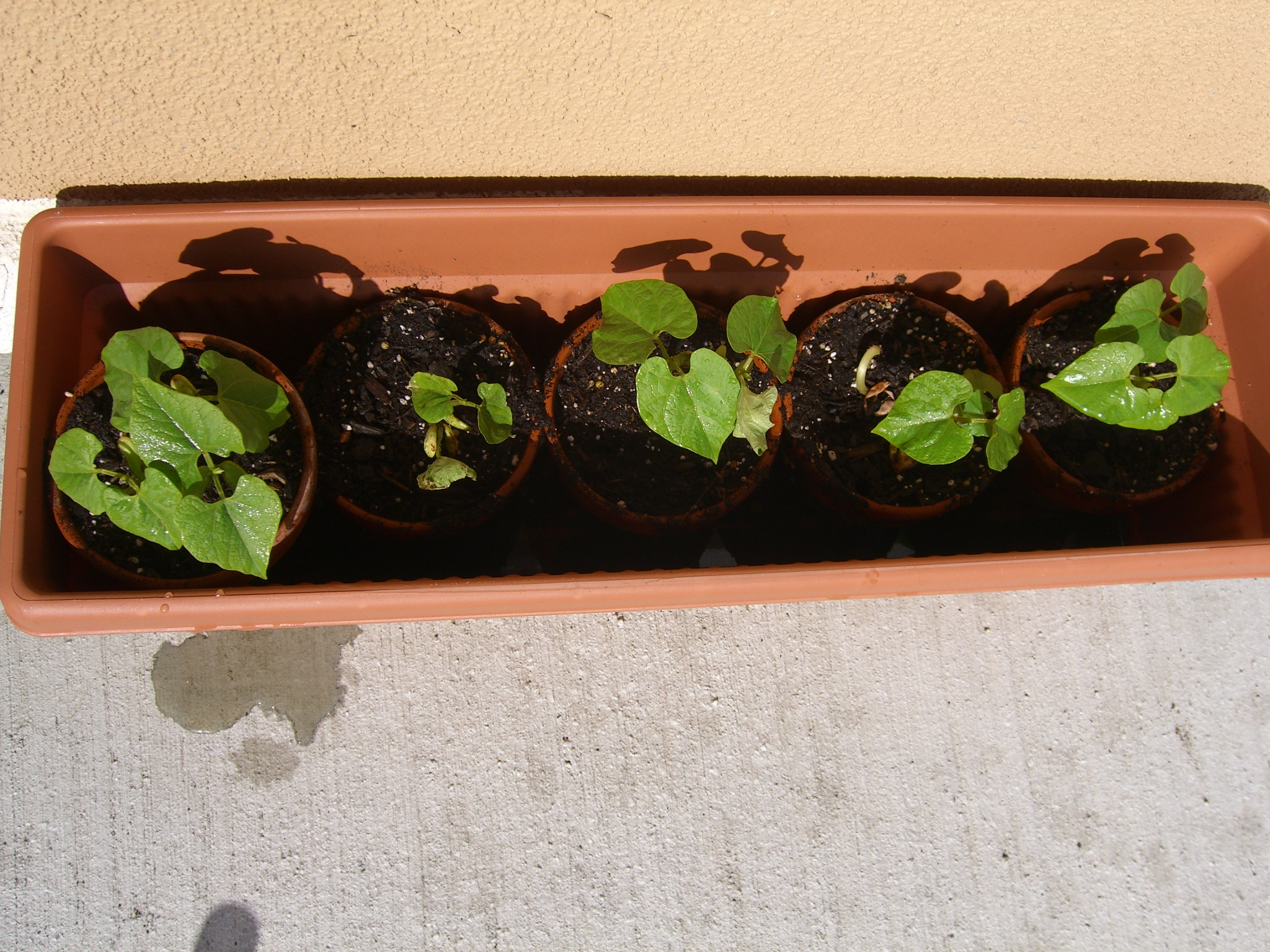 Small Moves You Can Do Now to Plan your Apartment Garden – 2/22/12