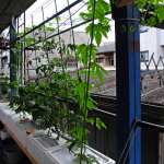 Hydroponics – A Small Garden with Big Benefits