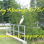 Monday Musings:  5/5/2014