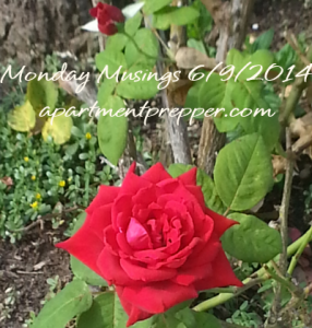 Monday Musings 06092014