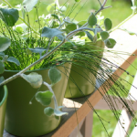4 Tips for Small Space Gardening