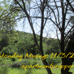 Monday Musings:  11/3/2014
