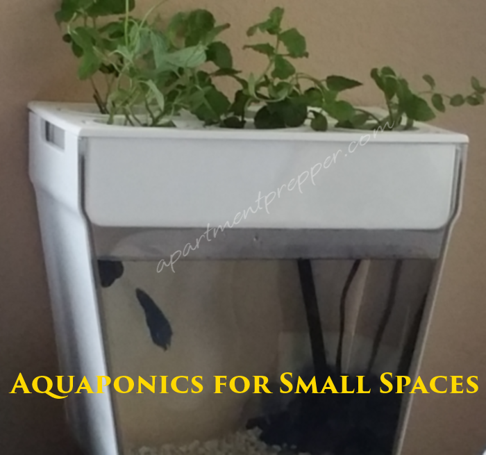 Aquaponics for Small Spaces