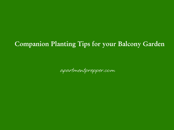 Companion Planting Tips for your Balcony Garden