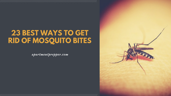 Best Way To Get Rid Of Mosquitoes In Your Backyard 23 Best Ways To Get Rid Of Mosquito Bites