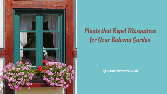 Plants that Repel Mosquitoes for Your Balcony Garden - Apartment Prepper