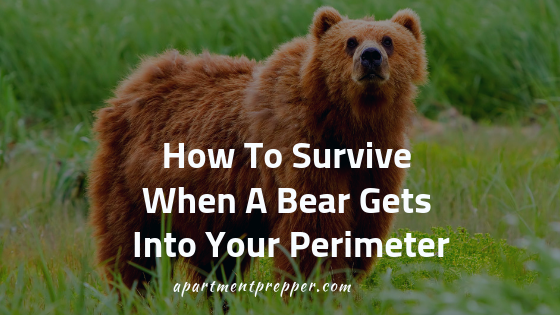 How To Survive When A Bear Gets Into Your Perimeter